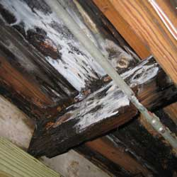 image of burn damage found in a real estate inspection by fred willcox. burn damage not reported by seller.